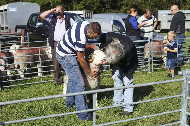 2014 Loweswater Show  first batch 156