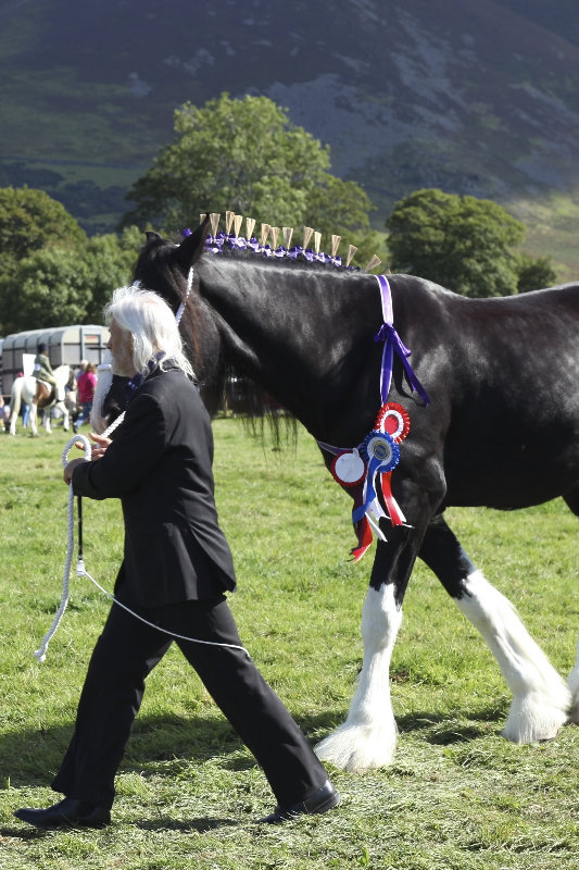 2014 Loweswater Show  first batch 186