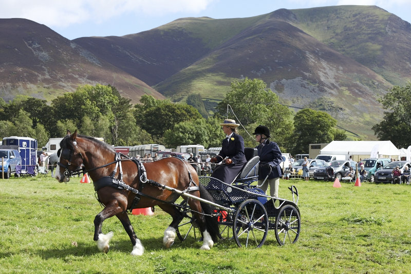 2014 Loweswater Show  first batch 188