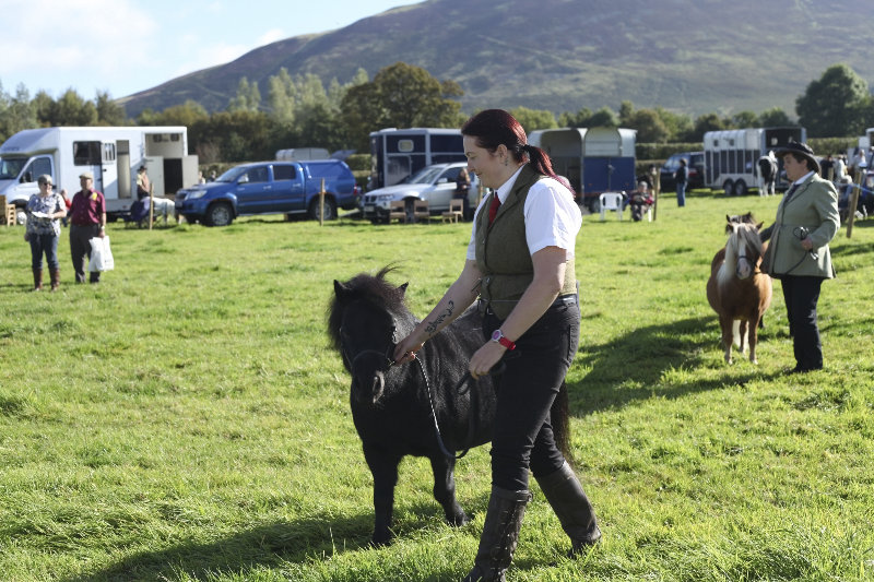 2014 Loweswater Show  first batch 280