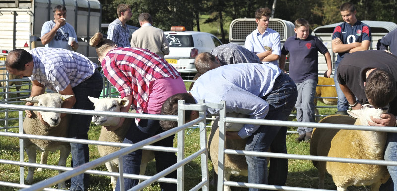2014 Loweswater Show  first batch 283