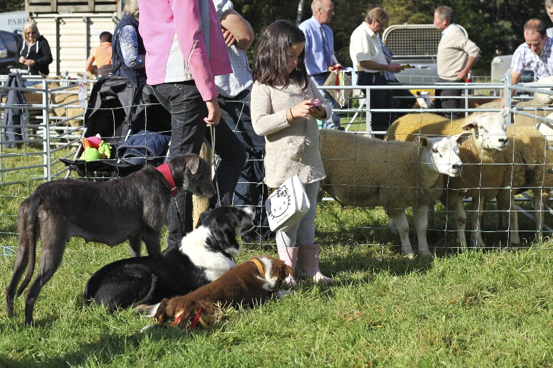 2014 Loweswater Show  first batch 286