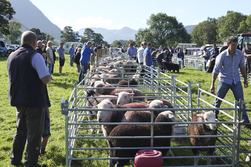 2014 Loweswater Show  first batch 292