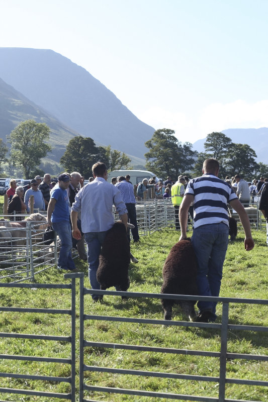 2014 Loweswater Show  first batch 293