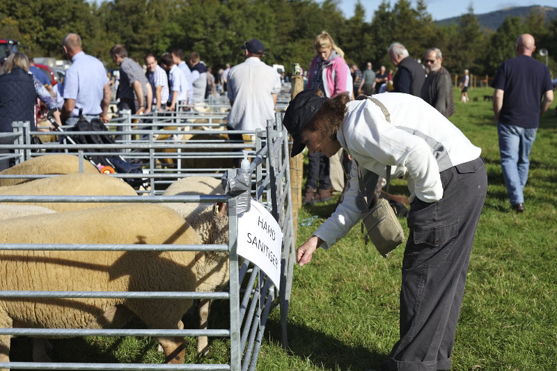 2014 Loweswater Show  first batch 300